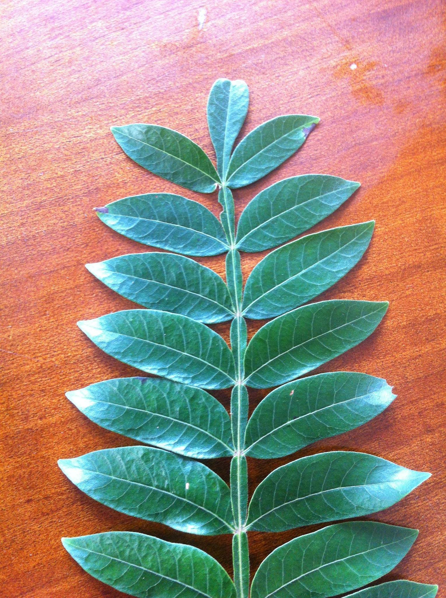 Help identifying please! - Plant Analysis and Substance ...