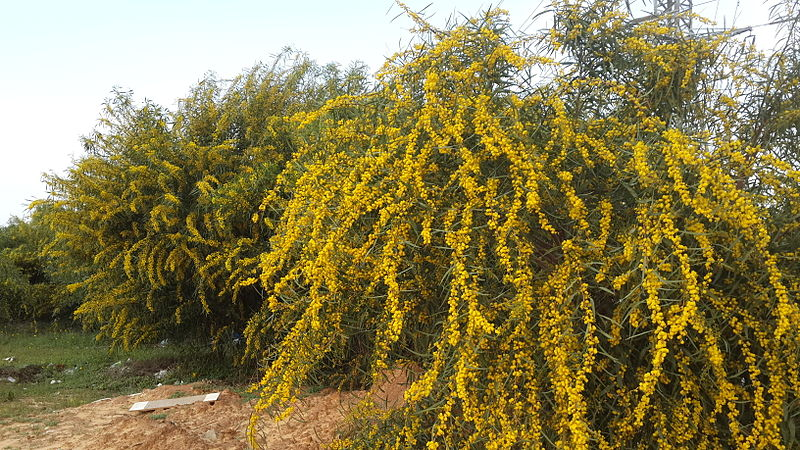Acacia id - Collaborative Research Project - Welcome to the